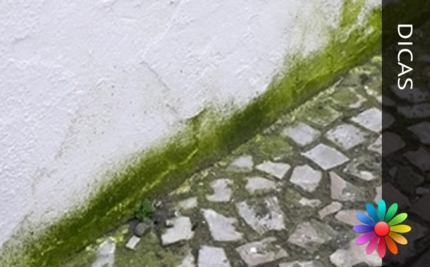 Limpar e Tratar Paredes Exteriores com Musgos, Fungos e Algas